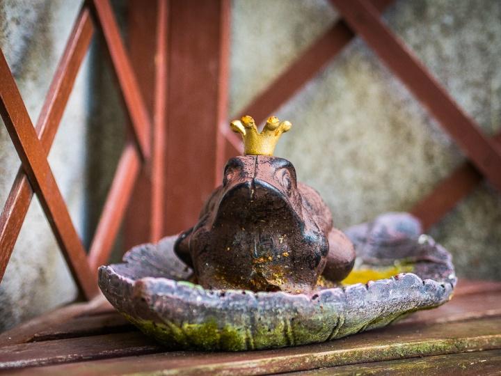 frog_prince.jpg