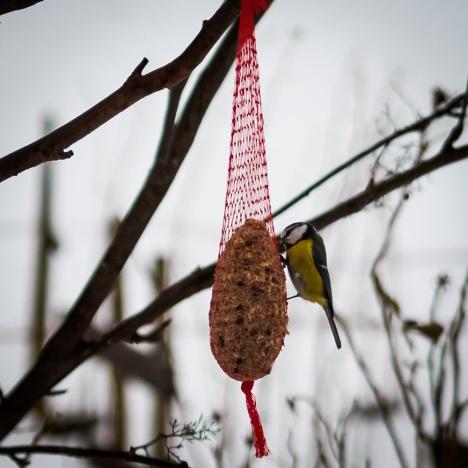 bird_feeding_1