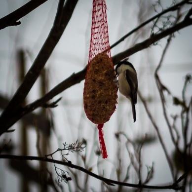 bird_feeding_3
