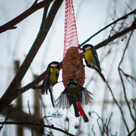bird_feeding_5