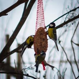 bird_feeding_6