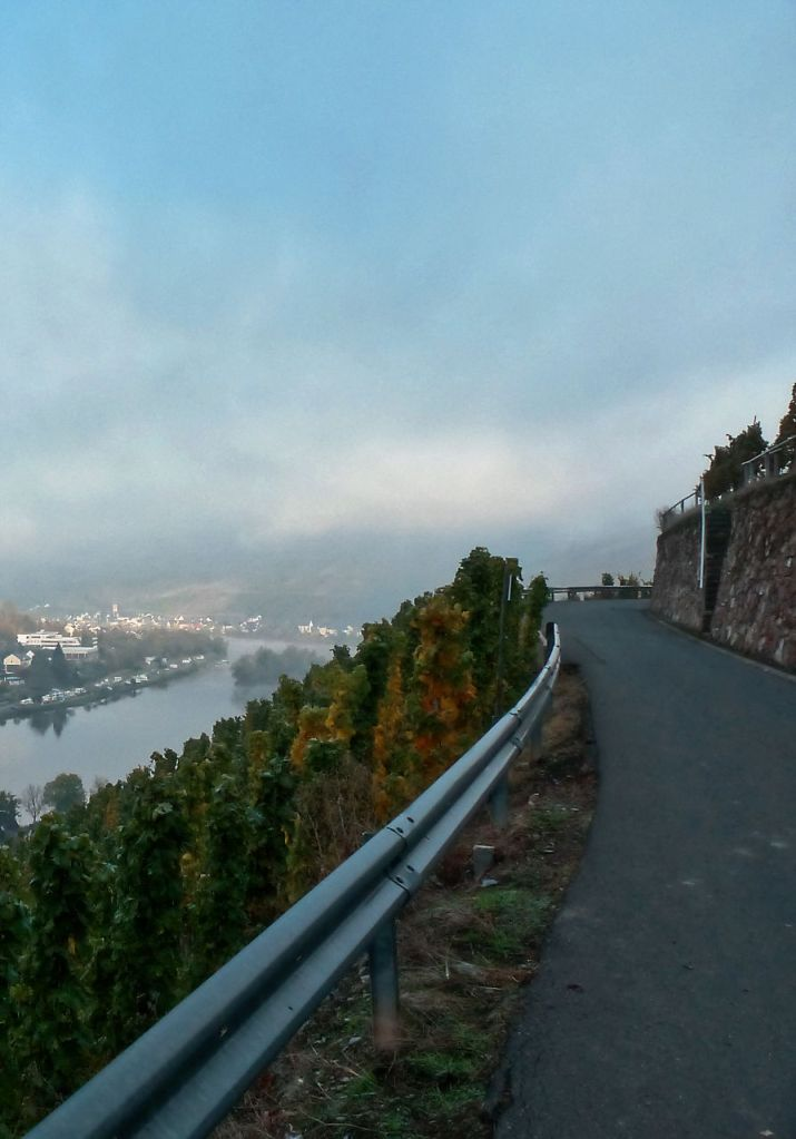 A road between vineyards with a view to the Mosel vallley
