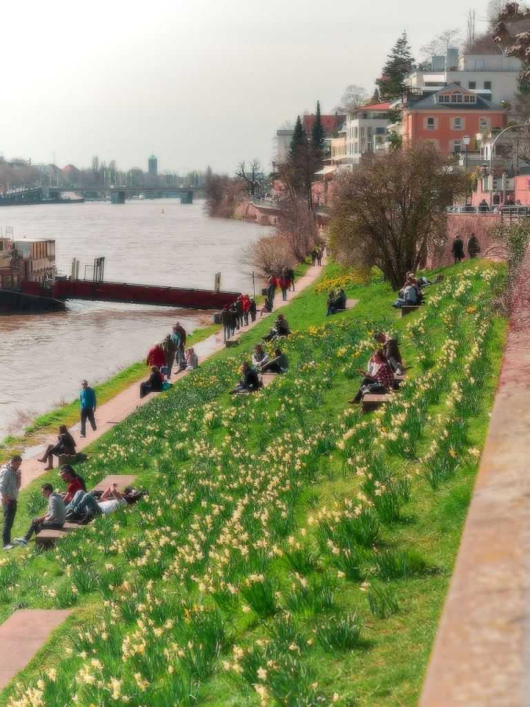 people enjoying a warm spring day among daffodils by the river Neckar in Heidelberg.